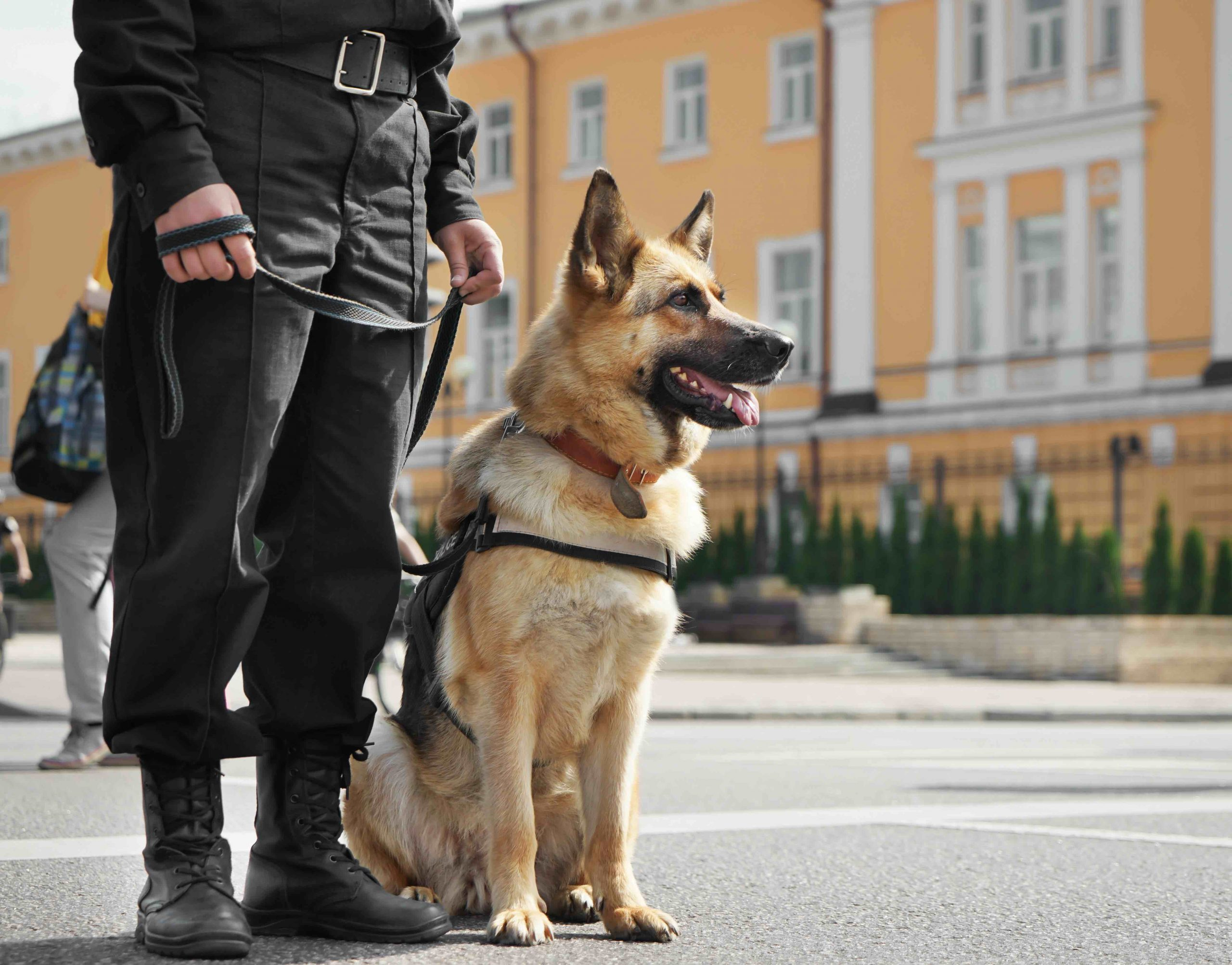 Security Dog and Handler