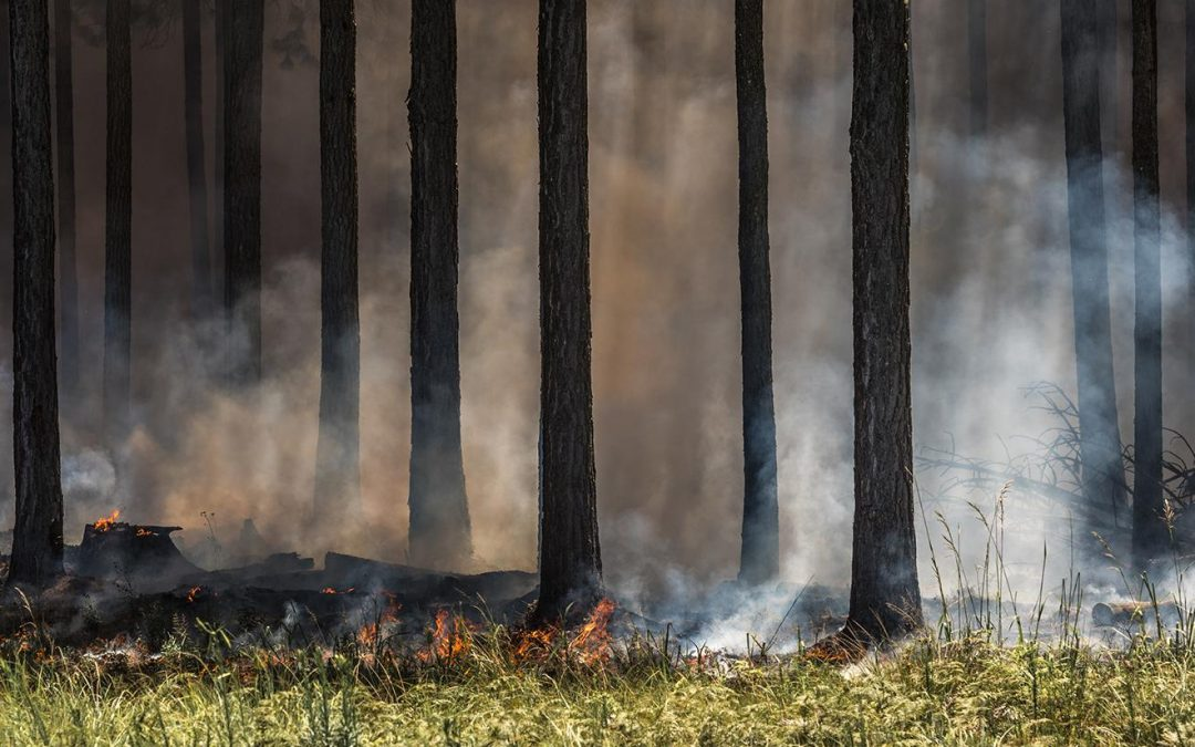 Fire Protection Tips For Your Business During Wildfire Season